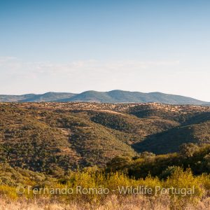 Tejo International Natural Park