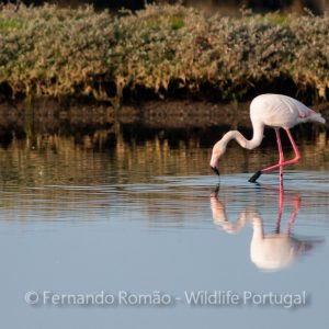 Nature Tours & Wildlife Photography